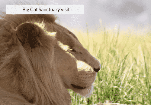 big cat sanctuary cape town